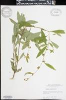 Specimen thumbnail image