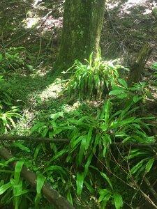 Carex fraseriana - Tara Littlefield