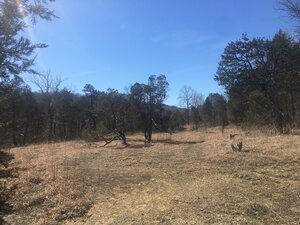 Juniperus virginiana var. virginiana - Tara Littlefield