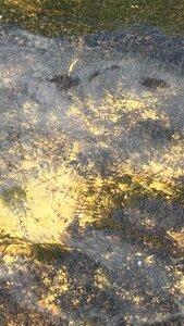 Podostemum ceratophyllum - Theo Witsell