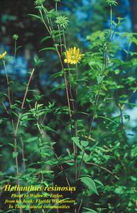 Helianthus resinosus