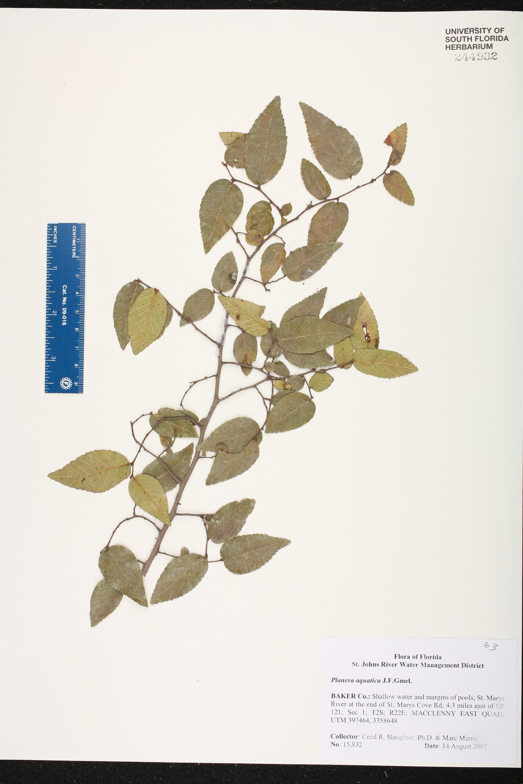 Vegetacion aquatica yahoo dating