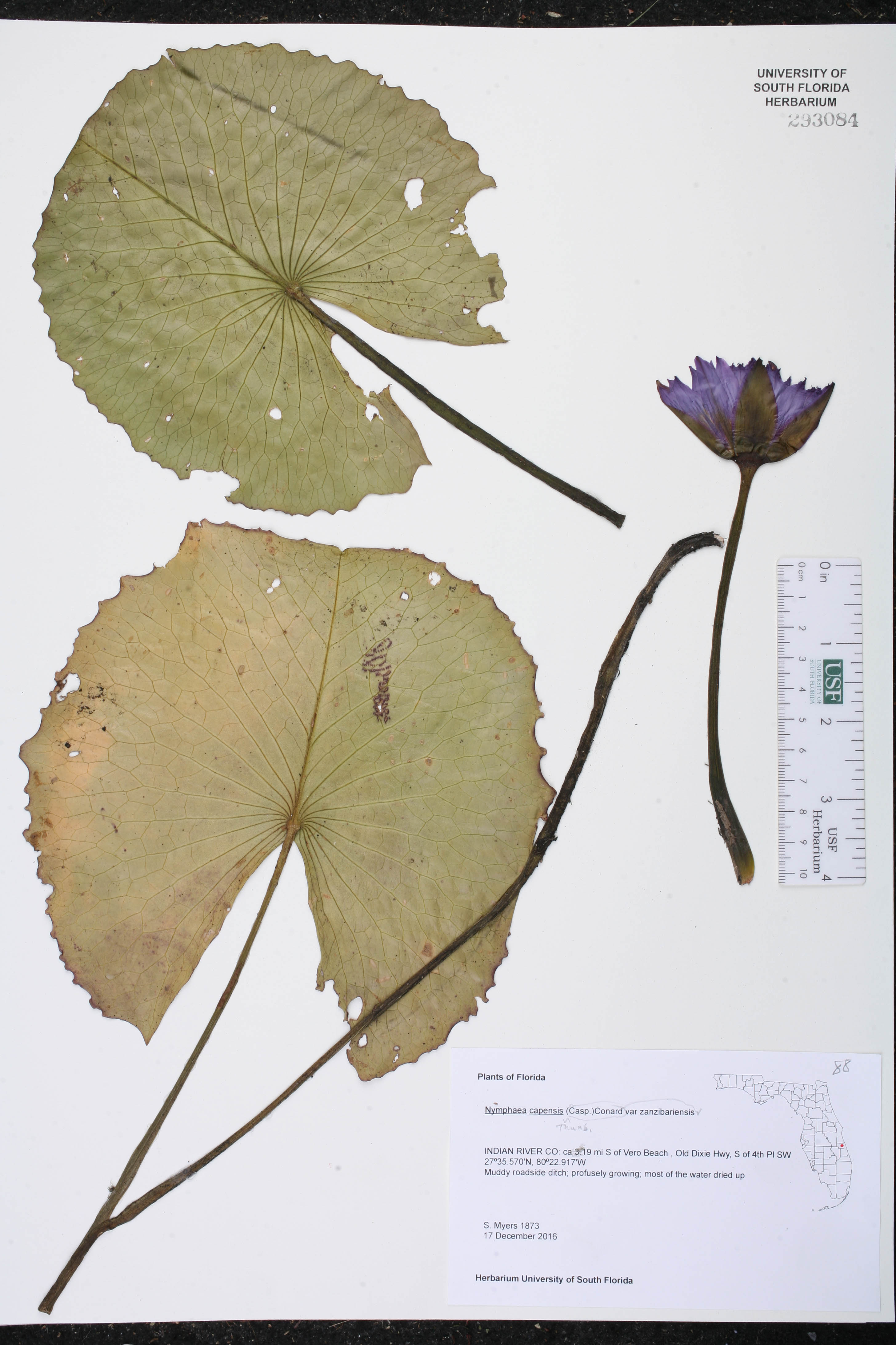How To Make A Herbarium File In Hindi Garden Design Ideas