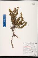 Catesbaea parviflora image